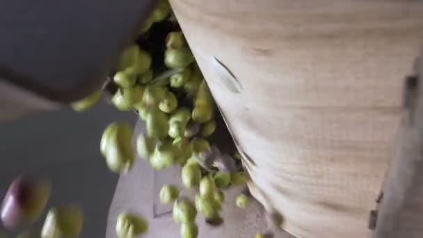 Produkce olivového oleje v jižně od Itálie oliv v drtič pomalý pohyb