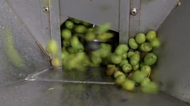 Skupina oliv v drtič-produkce olivového oleje v jižní Itálii