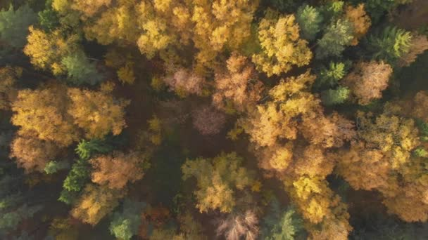 aerial colorful autumn forest with yellow orange green trees