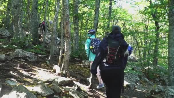 Hegymászók túrázás hátizsákok, hegymászó az erdei ösvényen, fel a hegyekbe, hátulnézet