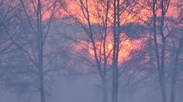 stromy, zjevení, klima, ekologie, barvu, symbol, život, klid, věčnost, rozjímání
