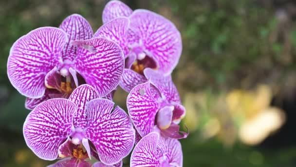 Květ orchideje orchidej zahradě v zimě nebo na jaře den pro pohlednice krásy a zemědělství myšlenku koncepce designu. Orchidej Phalaenopsis.