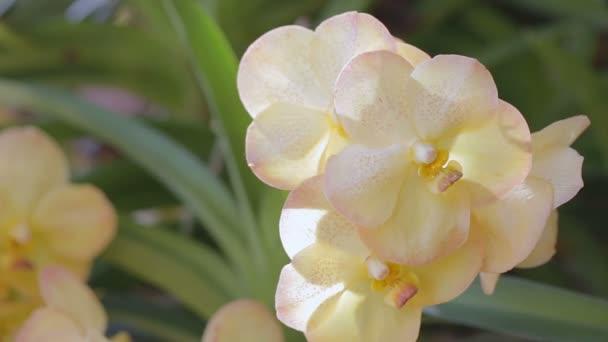 Květ orchideje orchidej zahradě v zimě nebo na jaře den pro krásu a zemědělství koncepce designu. Vanda orchidej