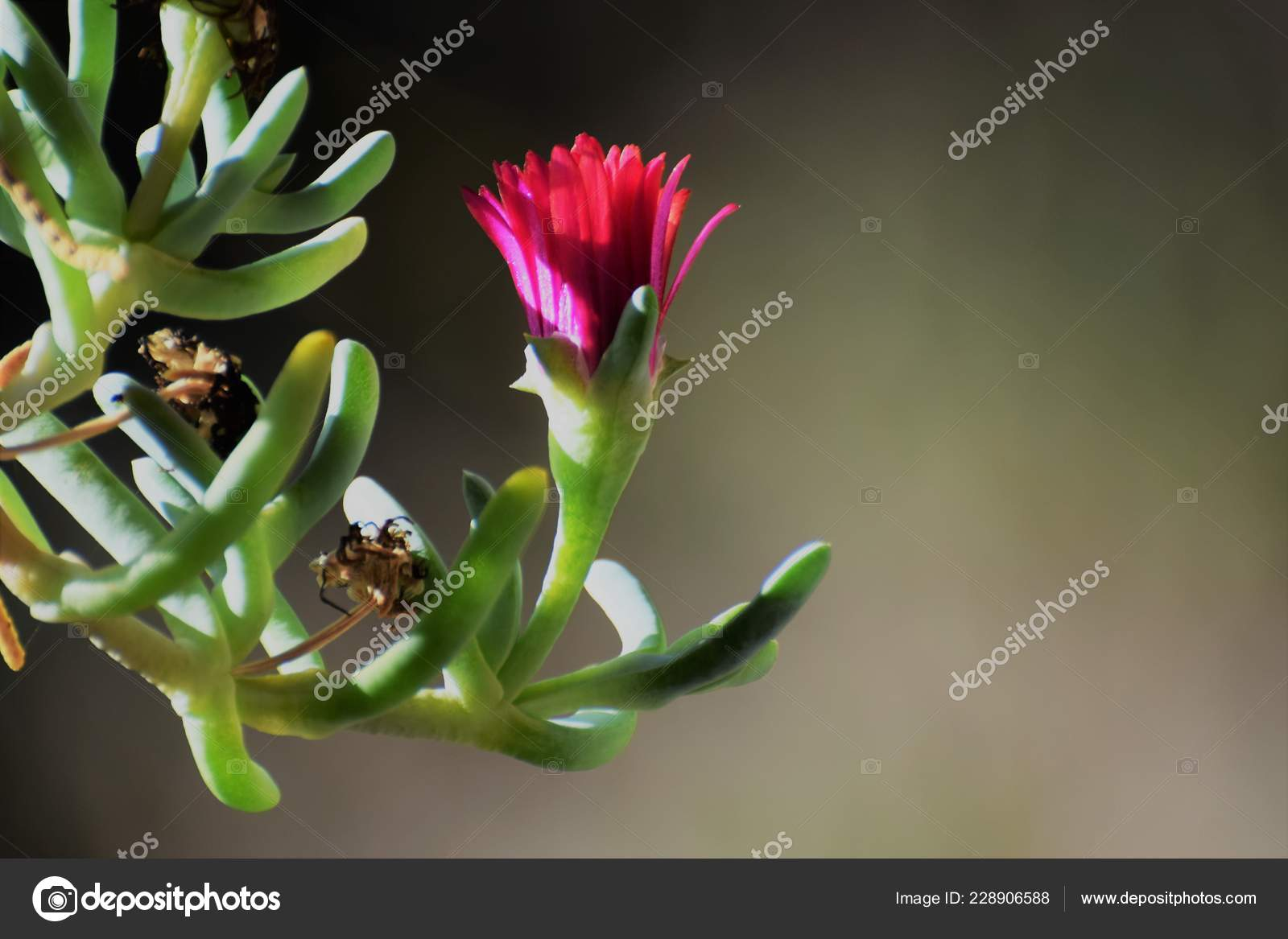 Good Morning Beautiful Flower Stock Photo Krasnenkongmailcom