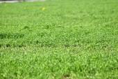 Zblízka zelené trávy na trávníku
