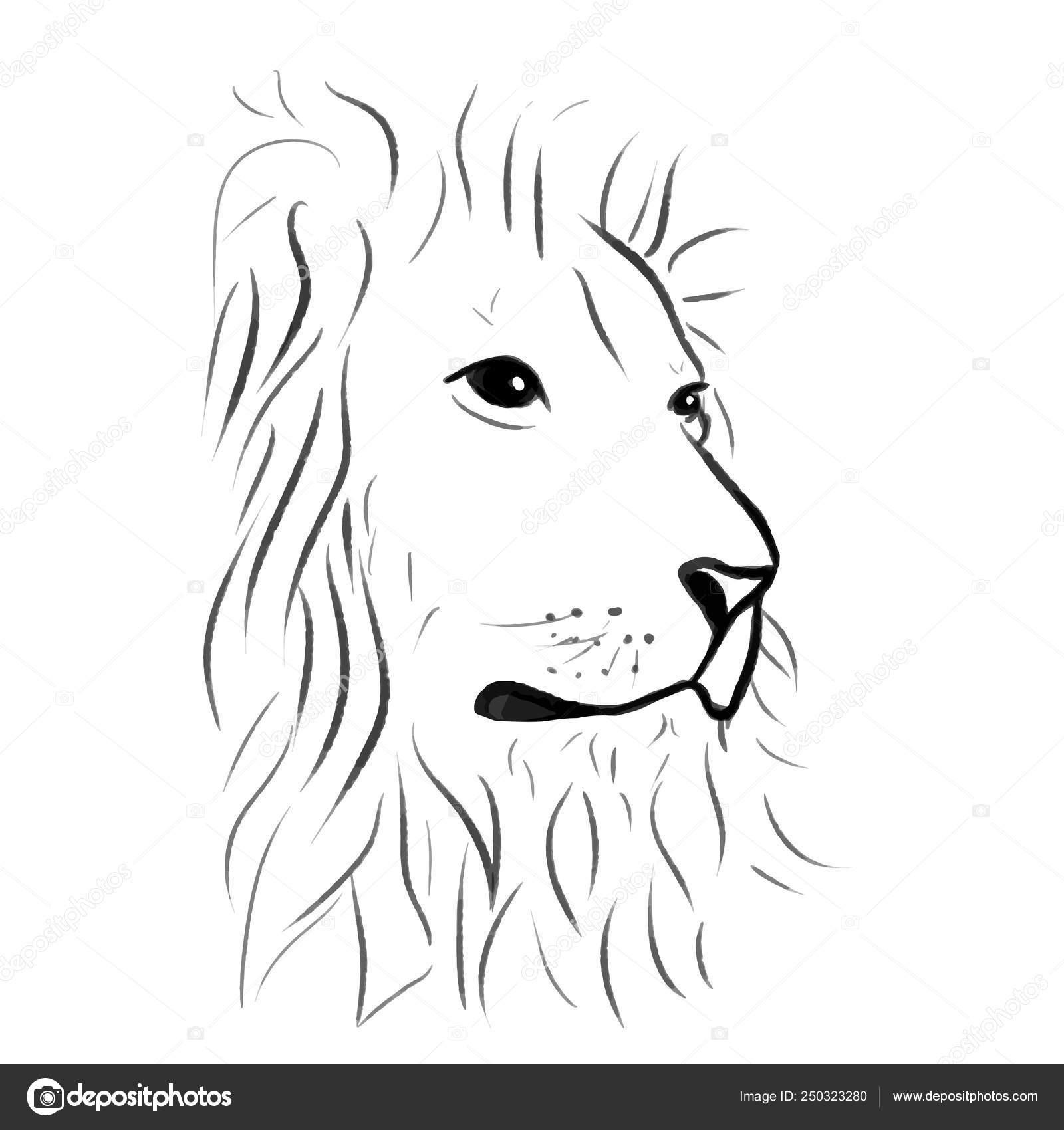 Vector Lion One Line Draw Illustration Stock Vector C Krasnenkon