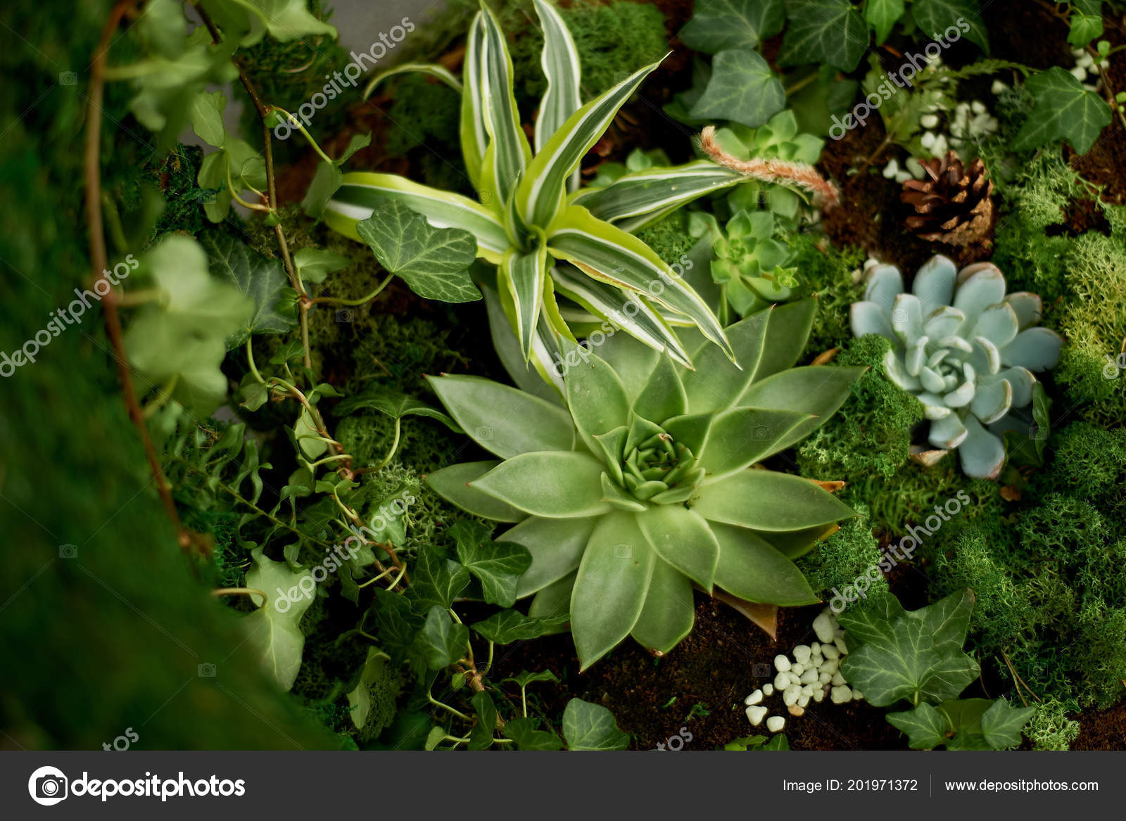 The Composition Of Succulents Ground Cover Plants Moss