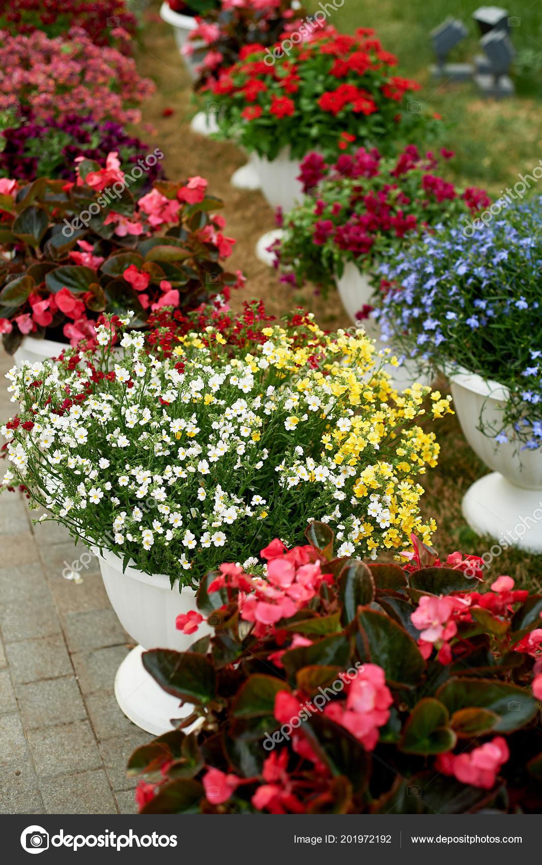 Macetas Blancas Con Flores Al Aire Libre La Decoración Del
