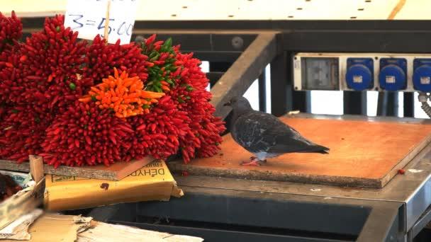 Holub jí červené chilli papričky na trhu s čerstvými produkty v Benátkách, Itálie