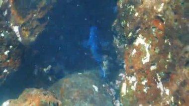 Blaue Riesen