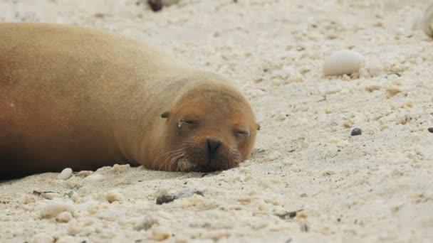 sleeping sea lion at isla genovesa in the galapagos