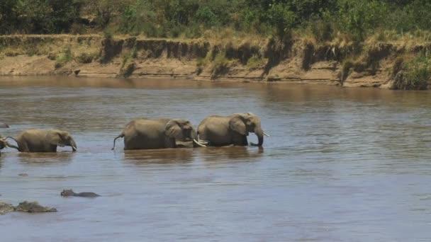 Langaufnahme einer Elefantenherde, die den Mara-Fluss überquert