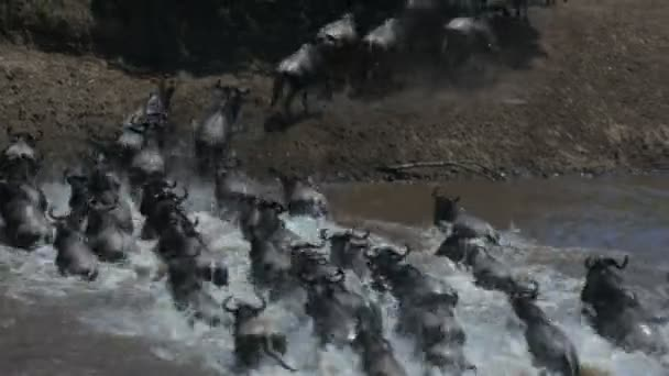 long exposure shot of wildebeest crossing the mara river