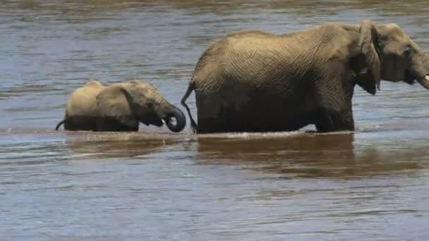 Nahaufnahme eines Elefantenkalbs und seiner Mutter beim Überqueren des Mara-Flusses
