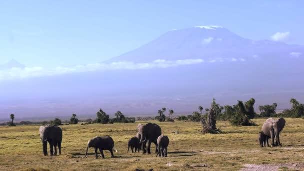 elefántok járni felé kamera MT Kilimandzsáró a háttérben