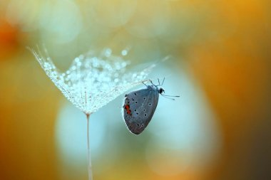 A small beautiful butterfly will collect pearls .
