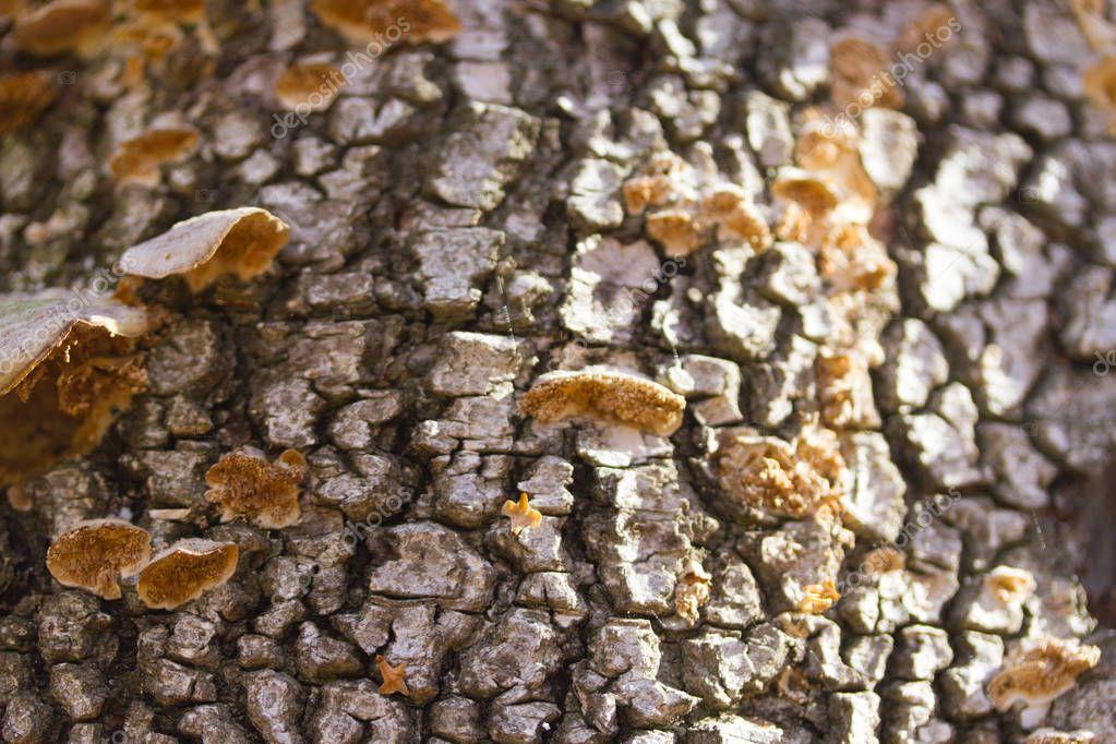 mushrooms or fungus on a tree