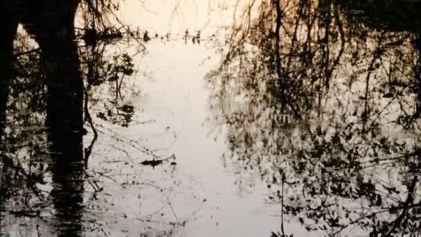 Přírodní pozadí. Jaro listnatý les při západu slunce. Zpomalený pohyb. HD