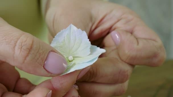 Žena, takže květiny umělé hortenzie papíru, bílé a béžové. 4k