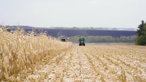 Je čas sklizně. Kombajn sklizně kukuřice a vykládání zrna do nákladní přívěs. Zpomalený pohyb. HD