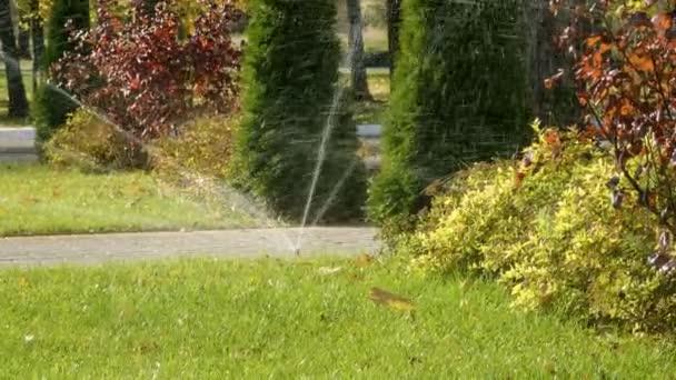 Sommerlandschaft. automatisches Bewässerungssystem für Pflanzen und Rasen. 4k