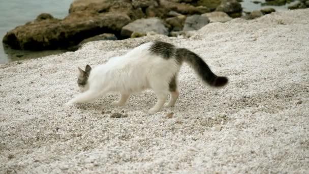 streunende Katze vergräbt etwas im Sand am Strand von Griechenland. Zeitlupe. hd