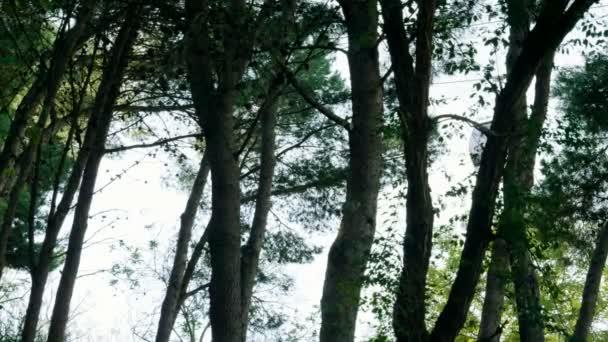 Pozemní lanovka se pohybuje po lanovky do Montjuic, za stromy. Pohled na město v Barceloně. Španělsko. Evropě. 4k