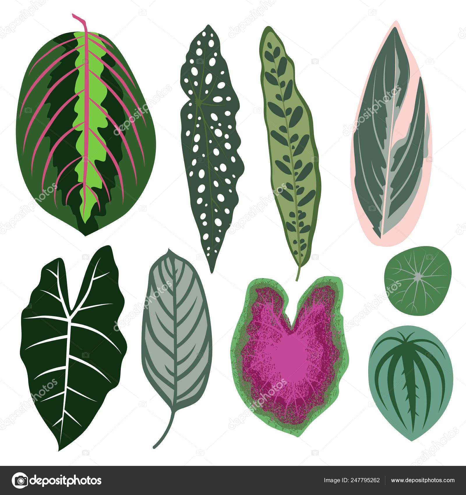 Vector Set Exotic Leaves Tropical Plants House Plants Vector Image By C Dorolka Vector Stock 247795262