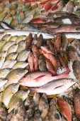 Vari tipi di pesce crudo sono visualizzati sul tavolo per la vendita nel mercato. Il pesce è mescolato con ghiaccio per conservare la sua freschezza.