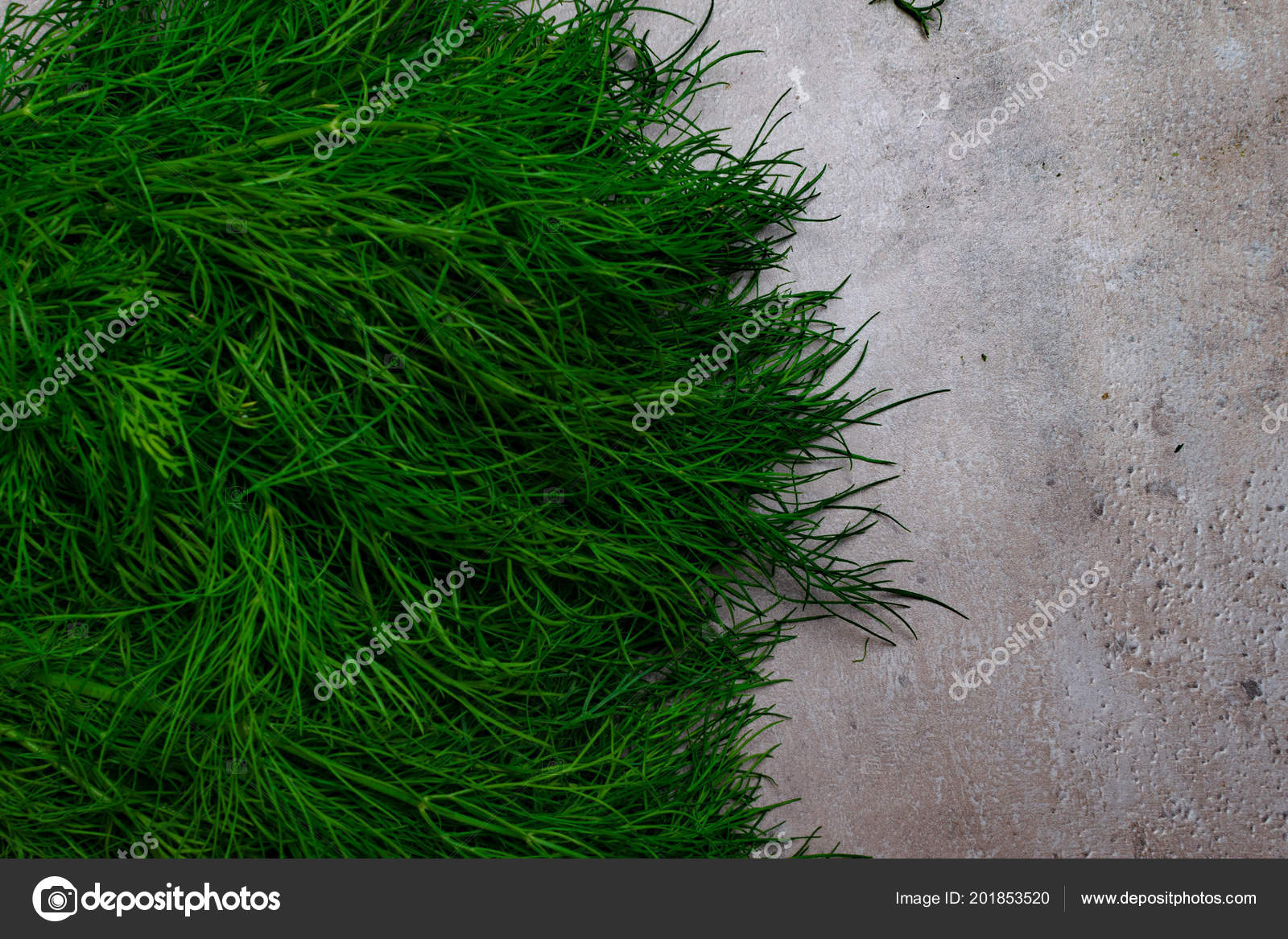 Fresh Green Bunches Garden Dill Grey Background Text Space Food U2014 Stock  Photo