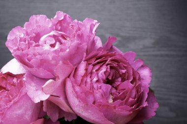 Pion-shaped roses, a bouquet of pion-shaped roses on grey background, pink pion-shaped roses. Gift for St. Valentine's Day and March 8. Roses