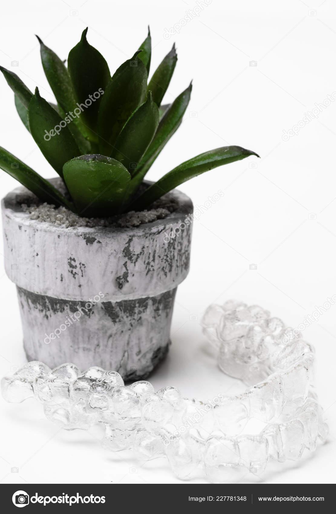 Invisible Aligner Decorative Cactus Pot White Background Copy Space
