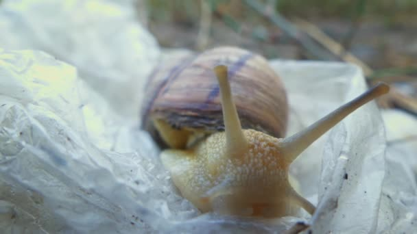 The snail (Helix pomatia, Burgundy snail, edible snail or escargot travels) slow moving on plastic bag. The concept of world pollution and saving the planet. Greenpeace. lose up, macro