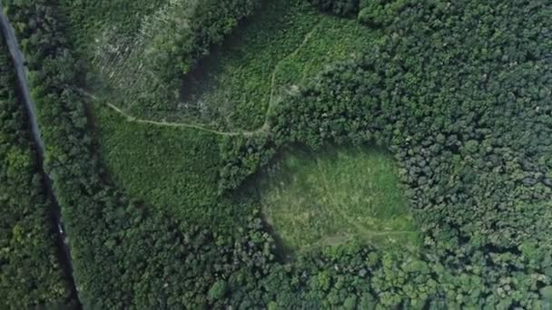 Aerial shot of a woodland terrain from the birds eye view. Human footprint on nature forest. An anthropogenic influence of man on nature. Earth protection and save the planet concept.