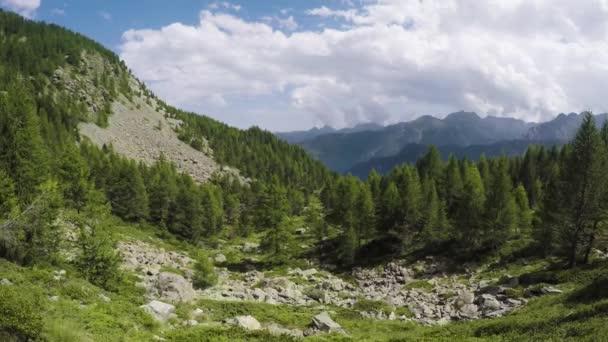 boční, pov chůzi po stezce na divoké lesy údolí. pěší turistiku či Treking dobrodružství v lese zelené přírody venku s filtrování sluneční světlo v slunné letní day.4k hlediska video
