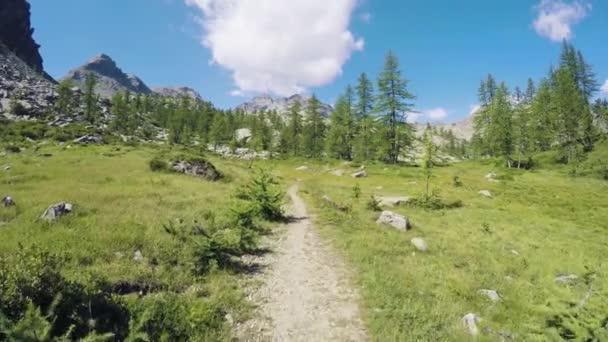 předávat pov chůzi po stezce na divoké lesy údolí. pěší turistiku či Treking dobrodružství v lese zelené přírody venku s filtrování sluneční světlo v slunné letní day.4k hlediska video