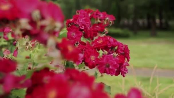 vörös virágok a nyári kertben