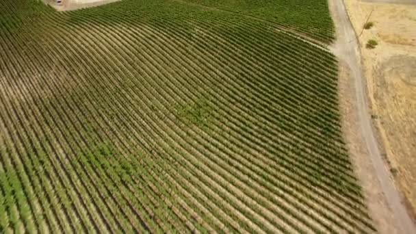 California Vinařství Vinice v Paso Robles Letecký snímek vína Země Naklonit dopředu