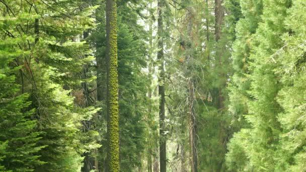 Národní park Sequoia Obří les Daytime Lapse California