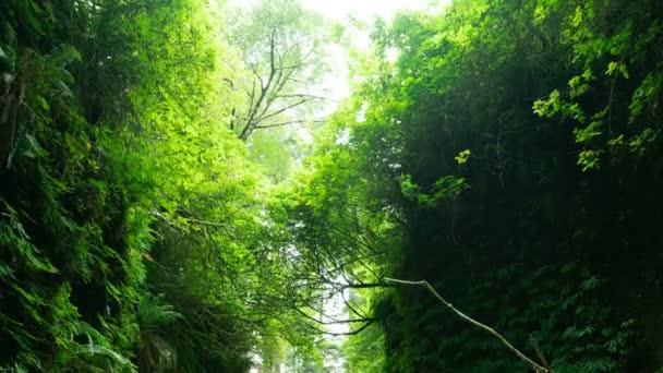 Redwood National Park Fern Canyon Time Lapse California Tilt Down
