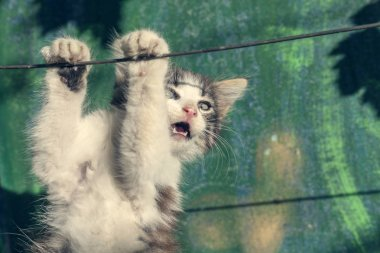 beautiful kitten hanging on the wire, toned