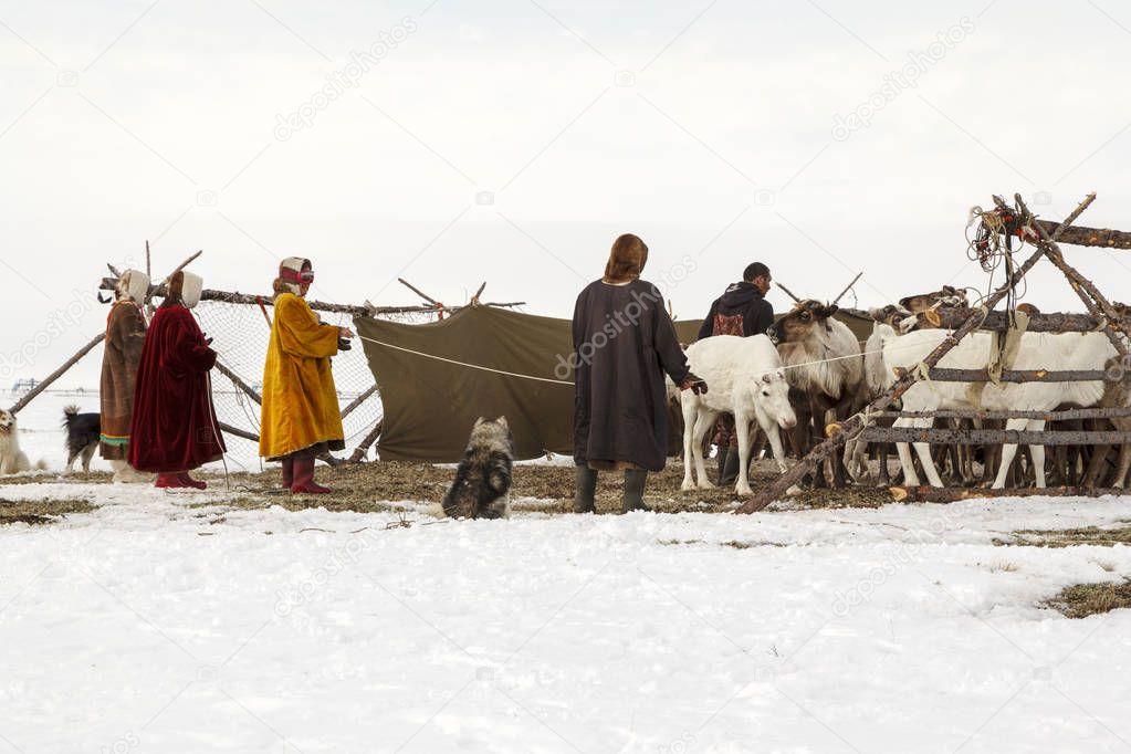 Nadym, Russia - april 27, 2018:tundra, open area, assistant reindeer breeder,  the women  in national clothes, editorial