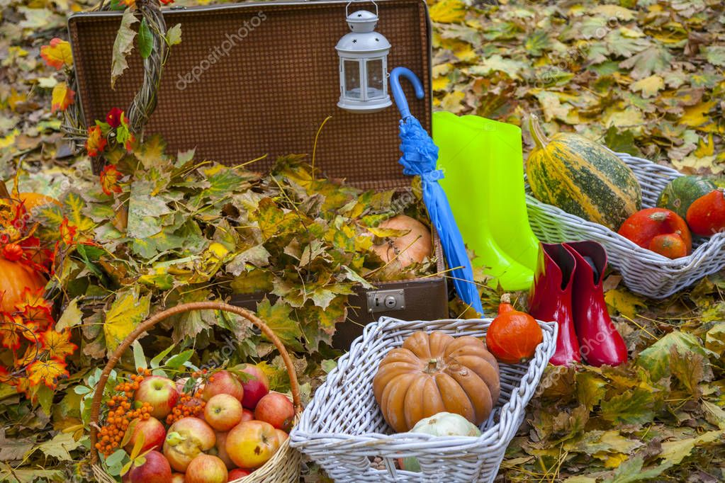 Autumn still life, an old suitcase with yellow leaves, a goat with red apples, an umbrella and rubber boots, pumpkins