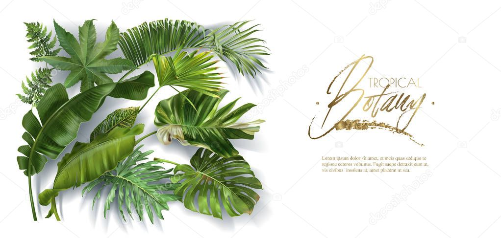 Vector Horizontal Banner With Green Tropical Leaves On White Background Luxury Exotic Botanical Design For Cosmetics Spa Perfume Aroma Beauty Salon Best As Wedding Invitation Card Premium Vector In Adobe Illustrator