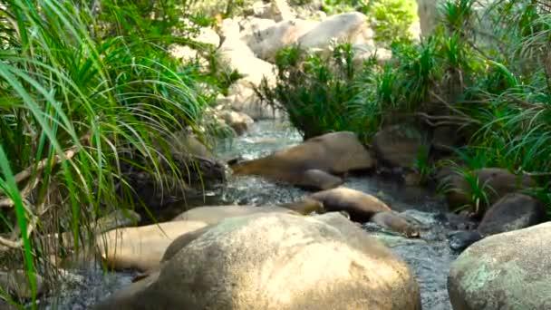 Rocky river v tropickém pralese. Velké kameny v rychlé řeky v horském lese. Divoké přírody