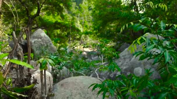 Green forest in tropical jungle and large stones in parched mountain river. Tropical forest in jungle mountains. Beautiful landscape wild nature.