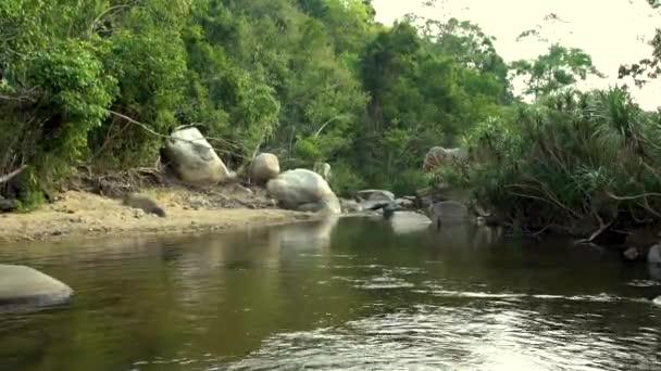 Řeka v krajině zelených deštných pralesů. Zelený tropický les a rocky river pobřeží. Krásné krajiny divoké přírody