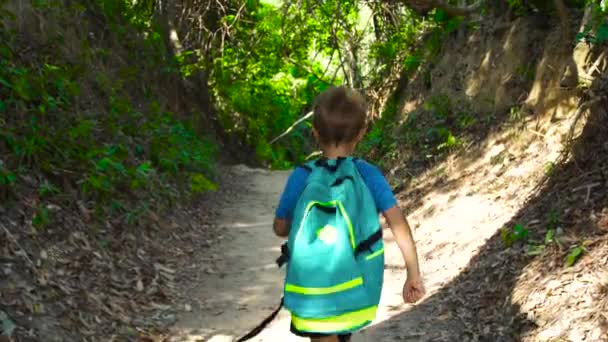 Little boy with backpack walking on forest pathway during summer trekking. Boy tourist walking on path in tropical forest back view. Hiking and summer activity concept.