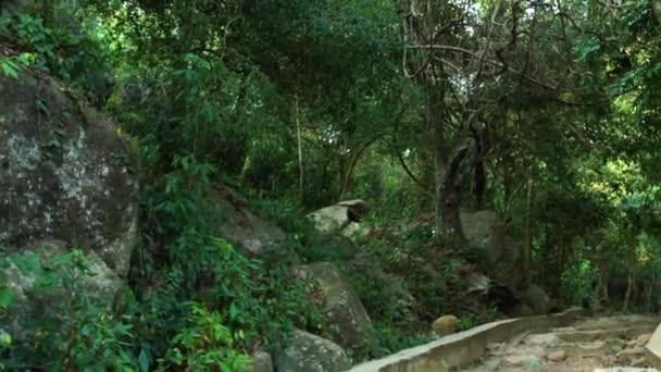 Panoramatický výhled na tropické stromy a zelené rostliny v deštných pralesů a kamenné schodiště. Kamenité kroky v tropickém pralese, turistické stezky. Stáž v džungli s liánami strom