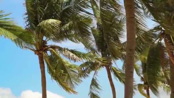 Tropical palm trees on blue sky background. Coconut palm trees and leaves swaying in wind on summer beach.